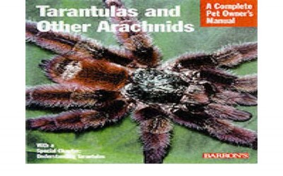 TARANTULA AND OTHER ARACHNID (PREORDER)