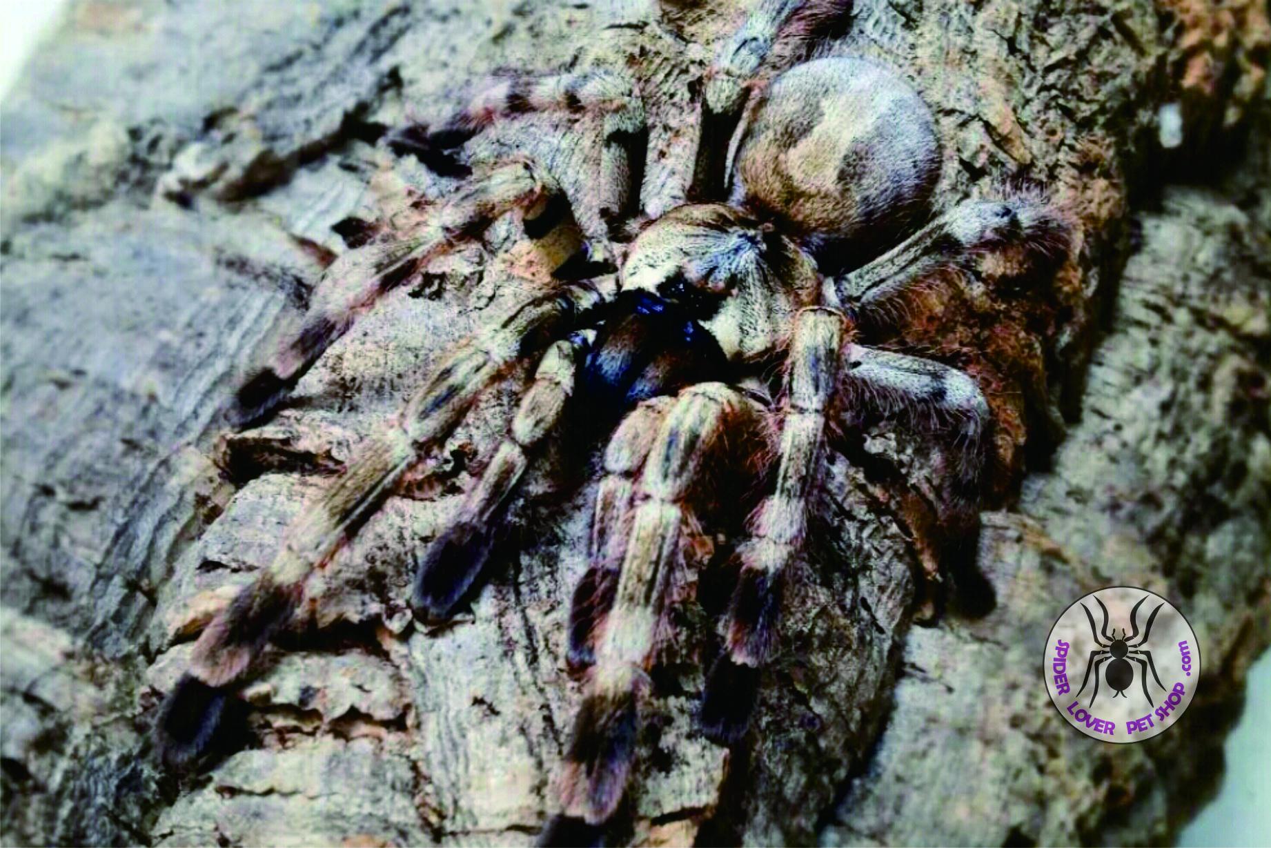 Home   Spider Lover Pet Shop