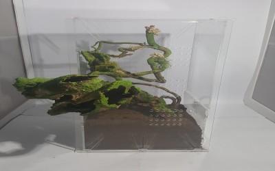 Kandang Tarantula Dekorasi Arboreal 17 17 40 cm