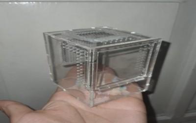 akrilik arbpreal 5 x 6 x 8 cm untuk sling avicularia / tapinauchenius
